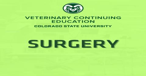 Small Abdominal Surgery